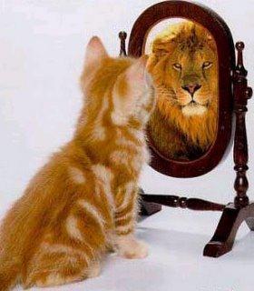 Spiegelreflectie